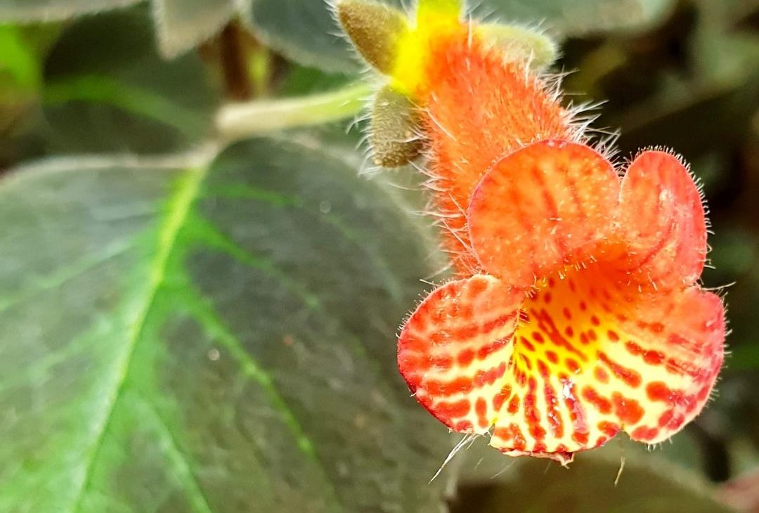 edimbourg ecosse royal botanic garden