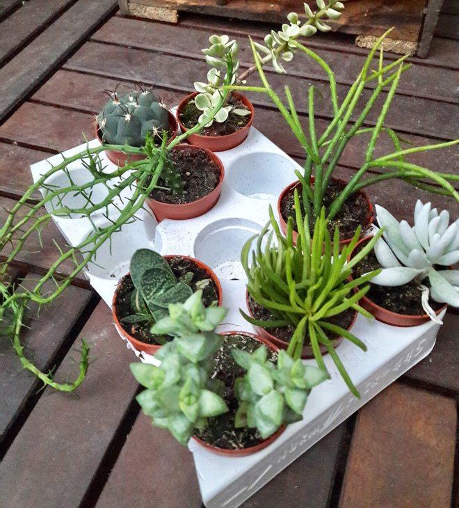 diy cactus étagère tutoriel