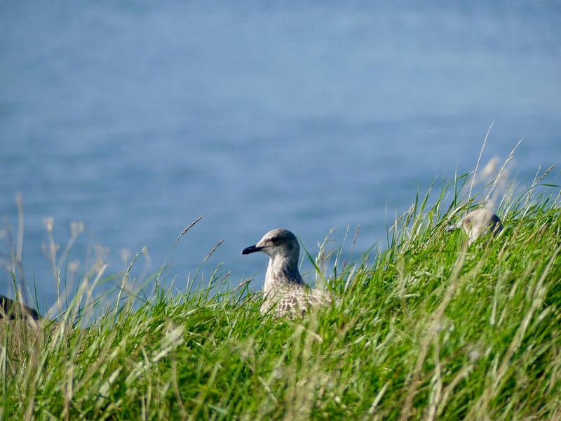 ecosse edimbourg queens ferry inchcolm island birds
