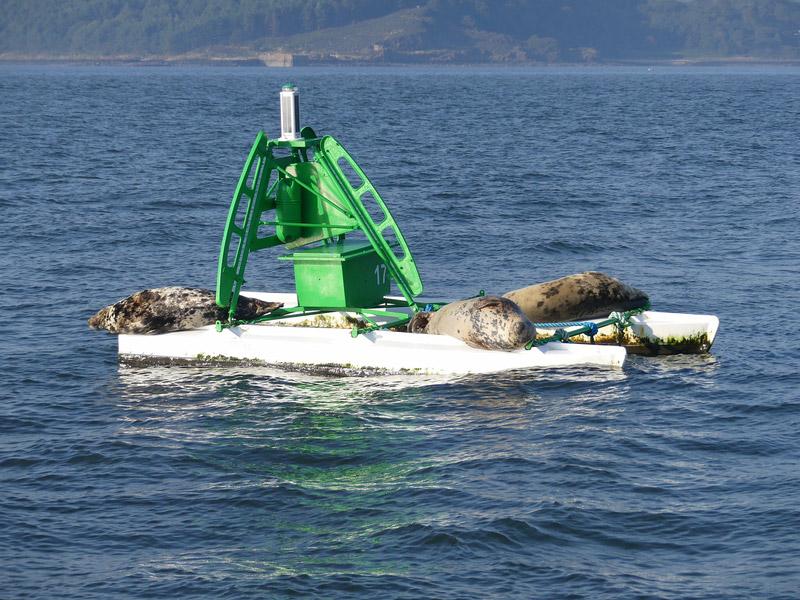 ecosse edimbourg queens ferry phoque