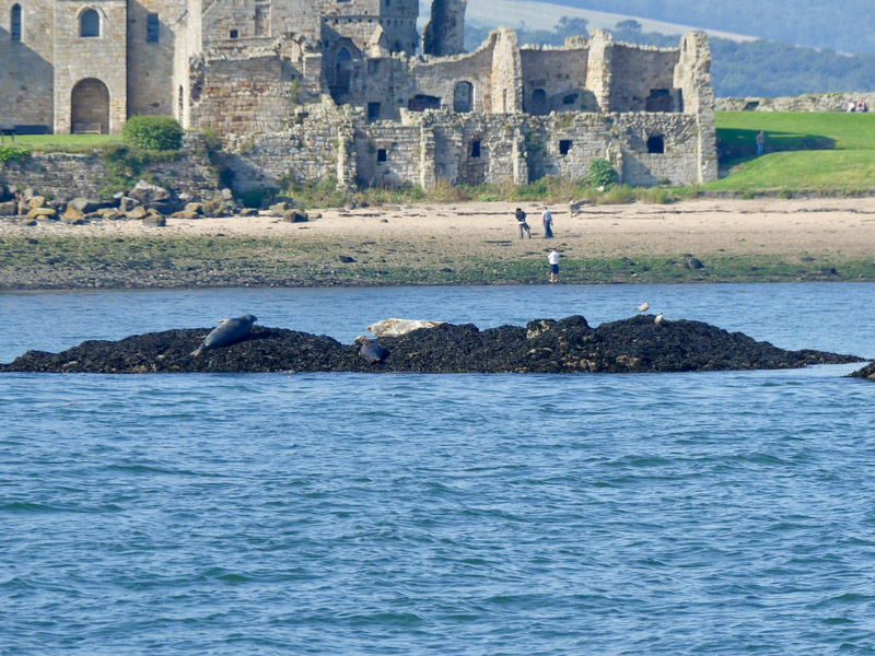 ecosse edimbourg queens ferry phoque inchcolm island