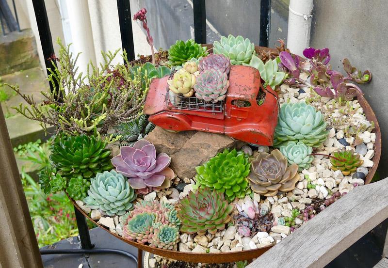 edimbourg ecosse succulent garden cactus plantes