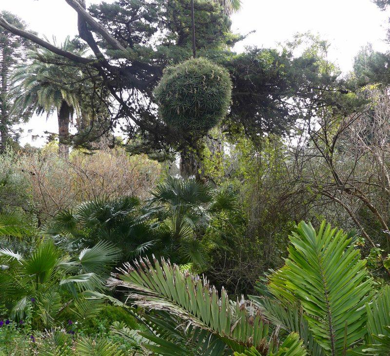 marimurtra jardin botanique blanes espagne