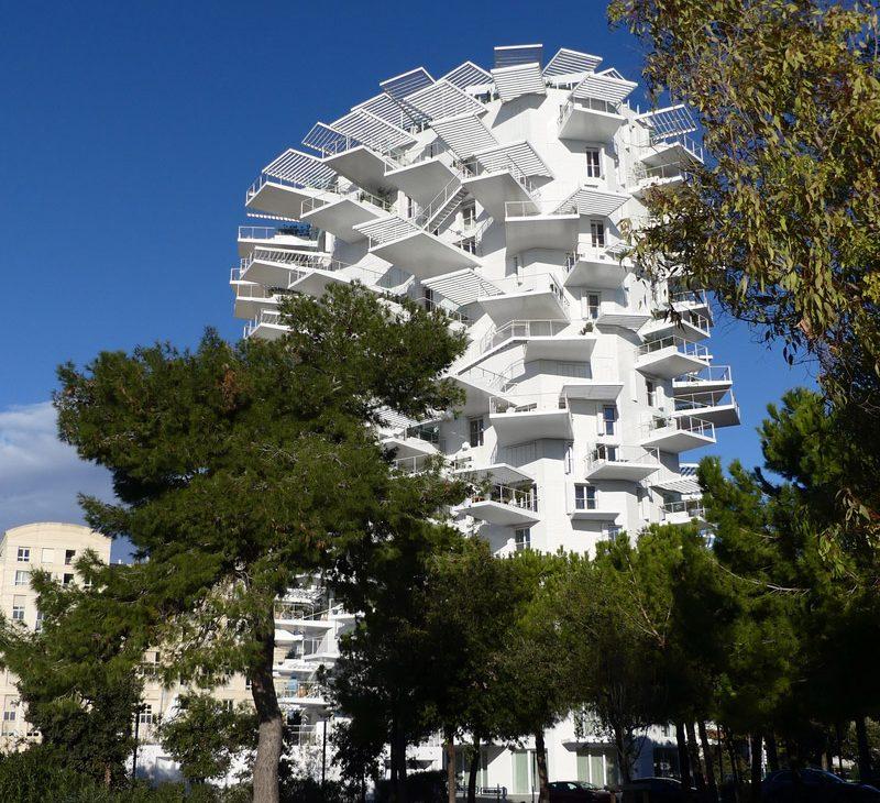 montpellier hérault tourisme arbre blanc lez