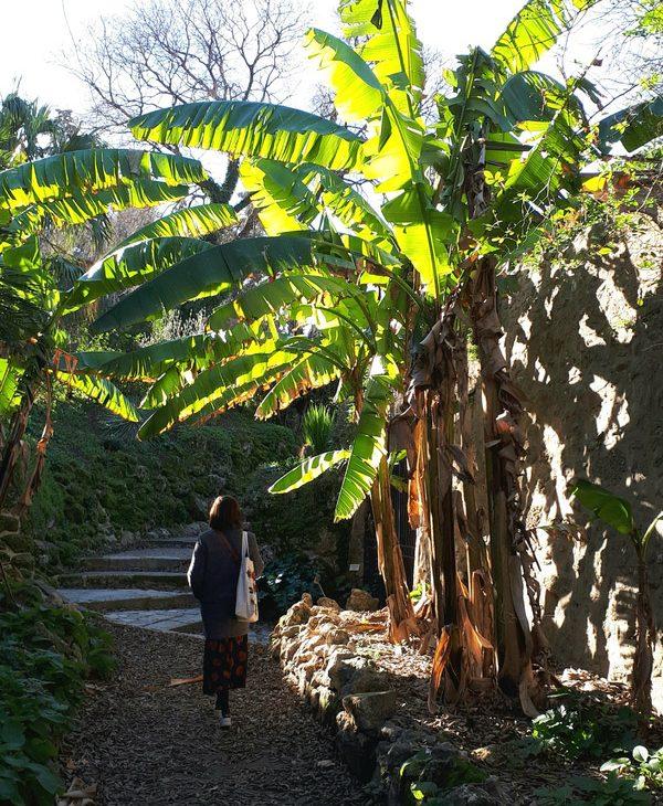 montpellier hérault tourisme jardin des plantes bananiers