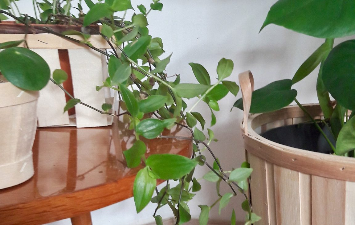 plantes monstera urbanjungeblog pilea