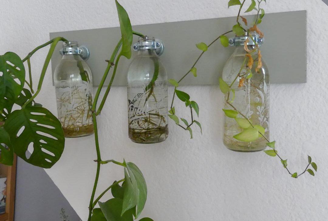 bouture plante