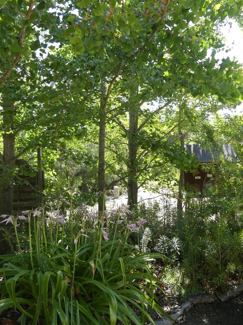 jardin exotique de Ponteilla